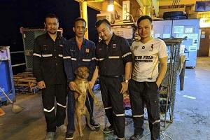 "Oil rig crew pose with a dog after the dog was rescued in the Gulf of Thailand. Survivor"" the dog is safely back on land after being found by oil rig workers swimming about 220 kilometers (135 miles) from shore in the Gulf of Thailand. Chevron Thailand worker Vitisak Payalaw posted on Facebook that the dog was sighted last Friday swimming toward the platform. Vitisak says the pup clung to the platform below deck without barking or whimpering. The workers think the dog fell off a fishing trawler.…"